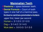 mammalian teeth49