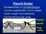 placoid scales
