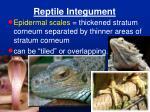 reptile integument