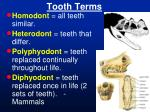 tooth terms