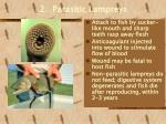2 parasitic lampreys