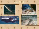 more sharks