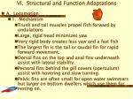 vi structural and function adaptations
