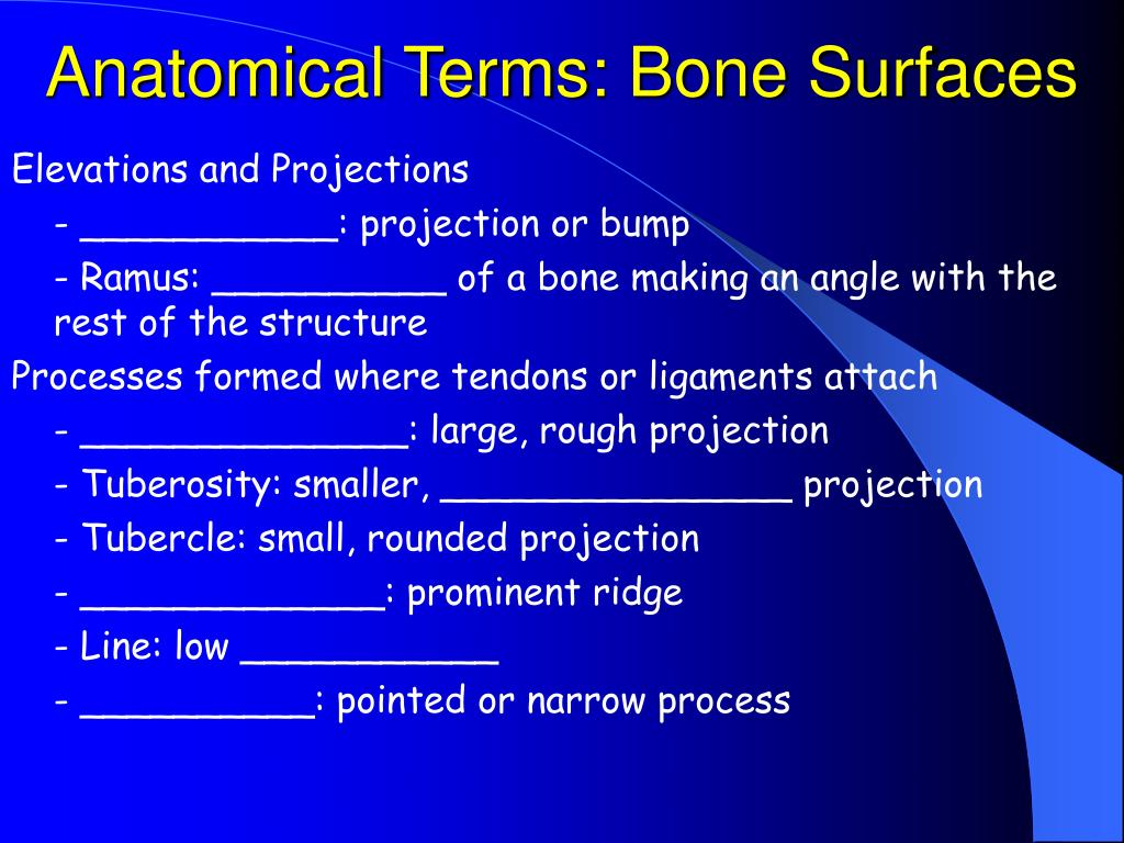 Anatomical Terms: Bone Surfaces