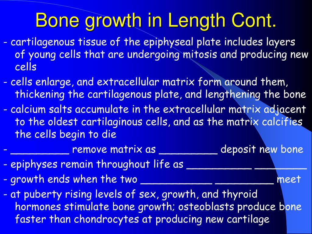 Bone growth in Length Cont.
