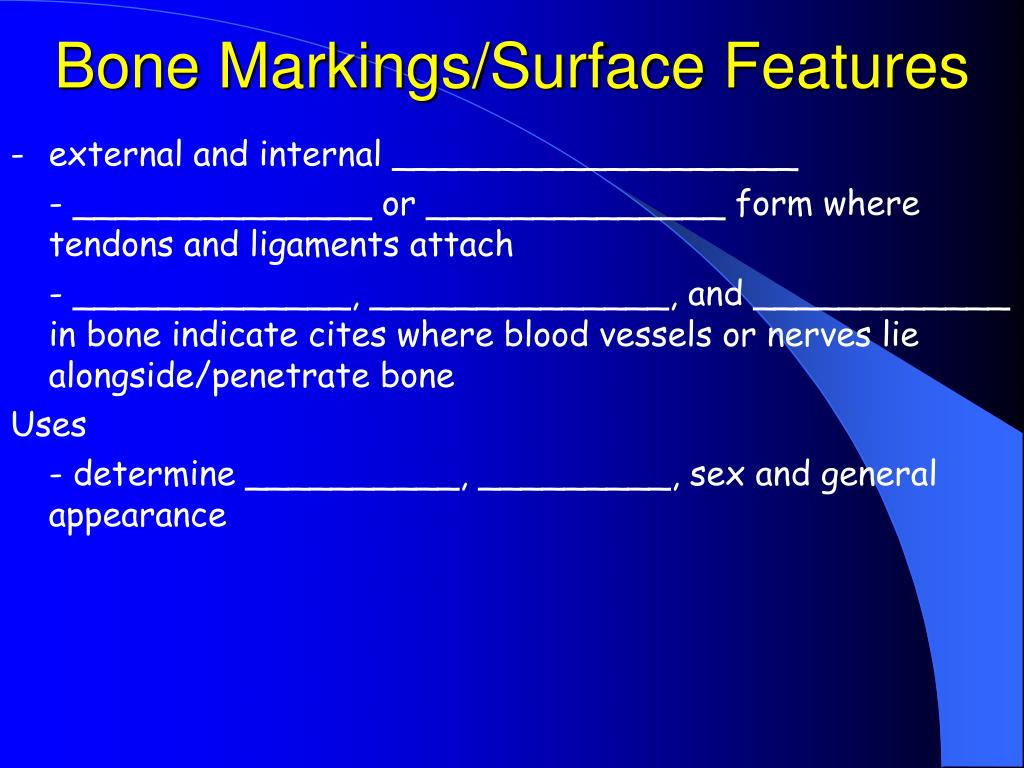 Bone Markings/Surface Features