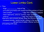 lower limbs cont80