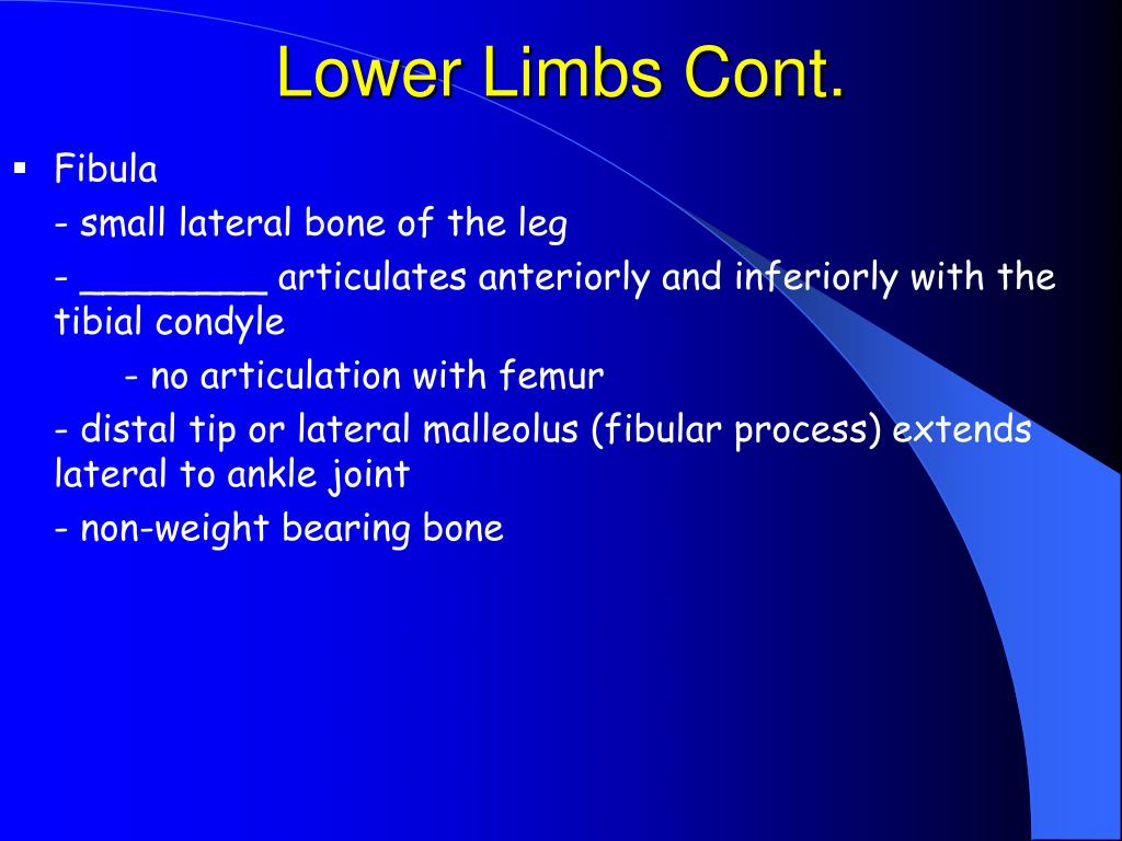Lower Limbs Cont.