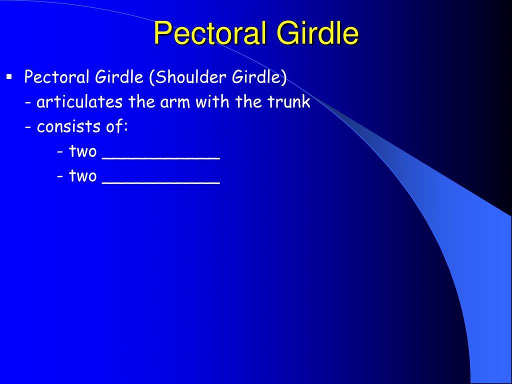 Pectoral Girdle