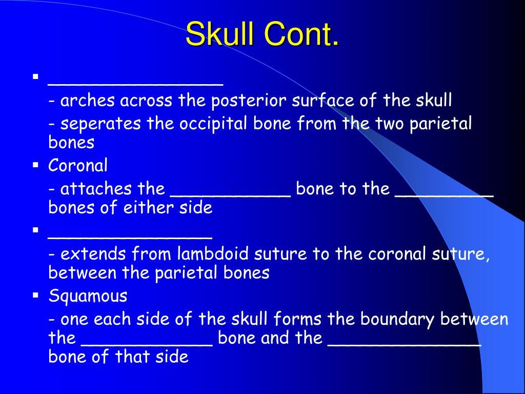 Skull Cont.