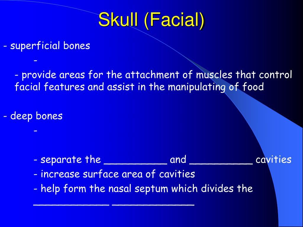 Skull (Facial)
