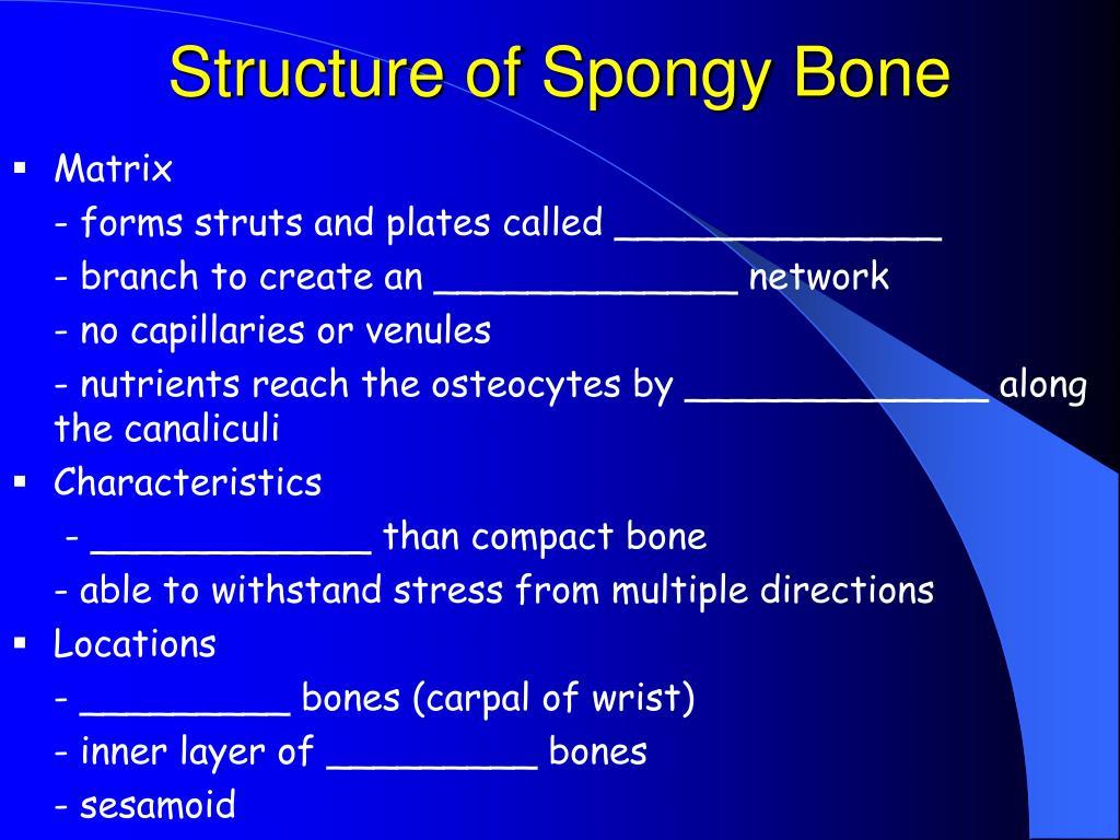 Structure of Spongy Bone
