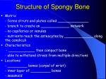 structure of spongy bone