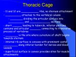 thoracic cage58
