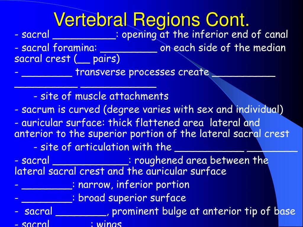 Vertebral Regions Cont.