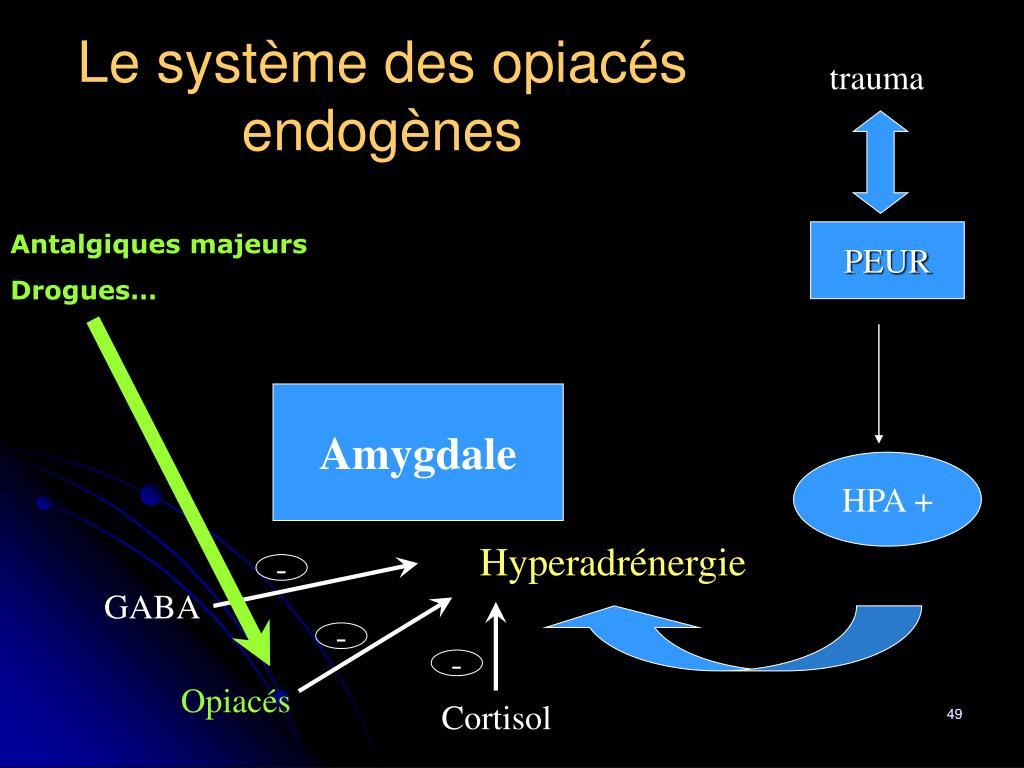 Le système des opiacés endogènes