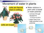 movement of water in plants