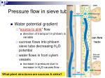 pressure flow in sieve tubes