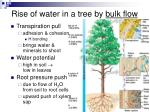 rise of water in a tree by bulk flow