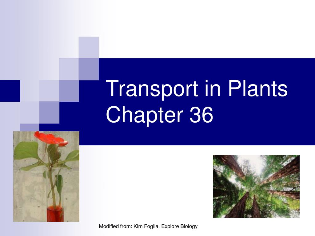 transport in plants chapter 36 l.