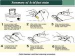 summary of acid fast stain