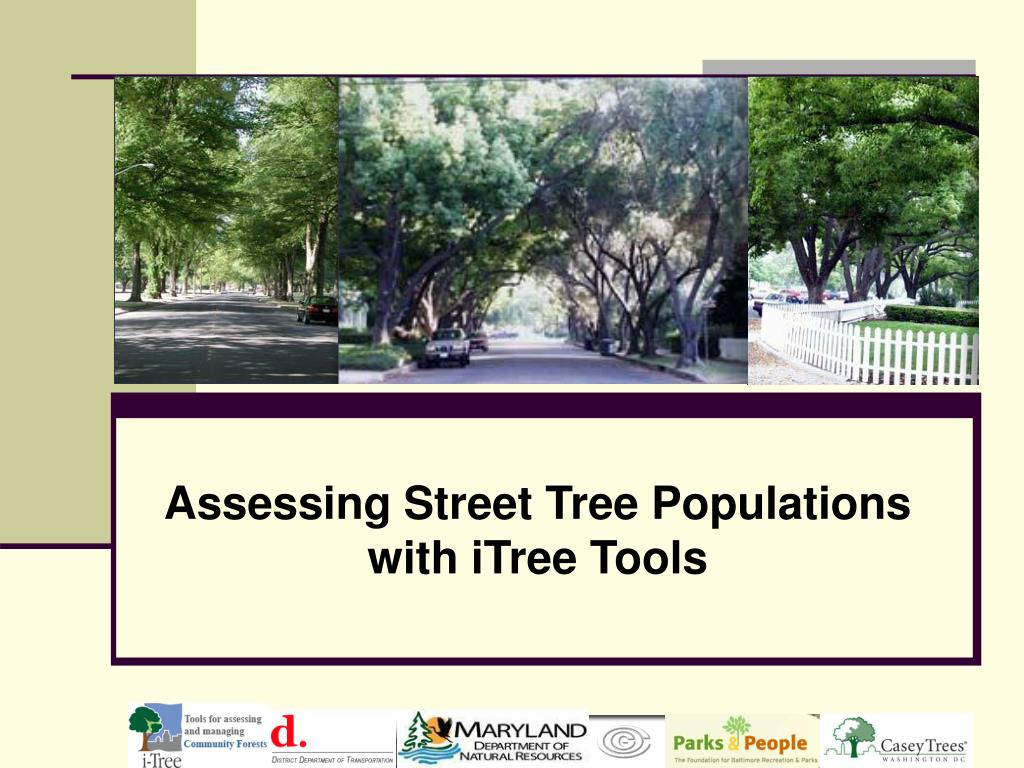 assessing street tree populations with itree tools l.