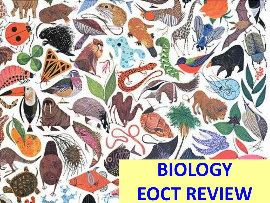 biology eoct review l.