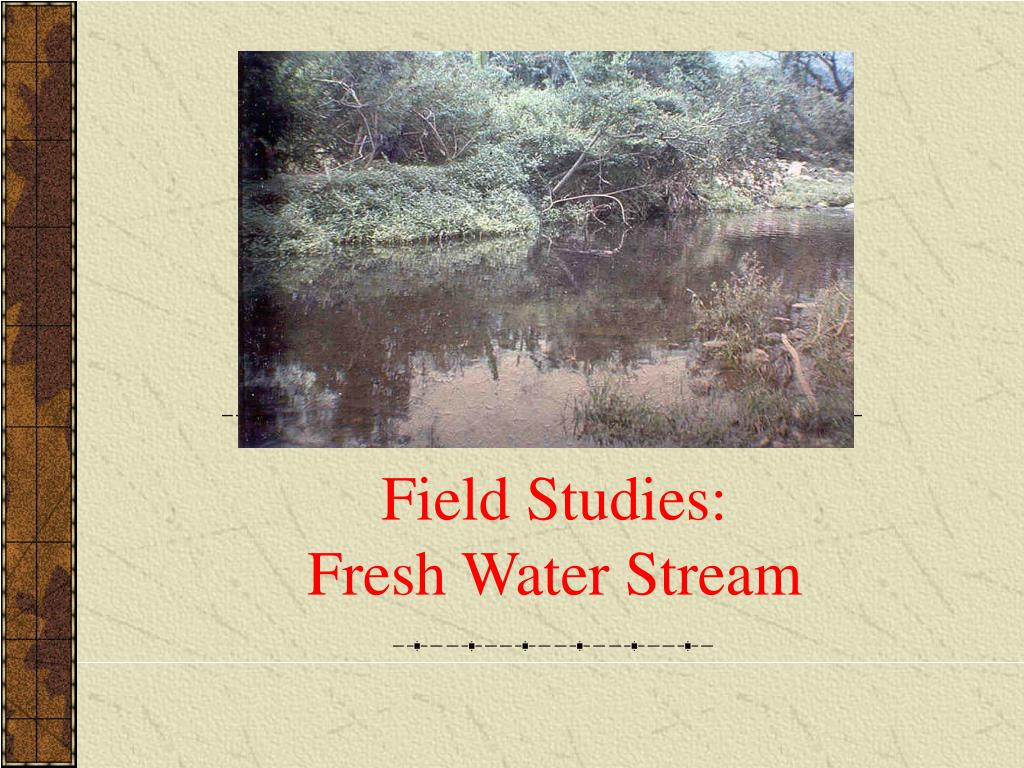 field studies fresh water stream l.