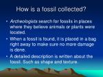 how is a fossil collected