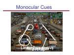 monocular cues69