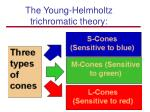 the young helmholtz trichromatic theory