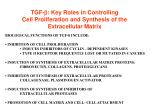 tgf b key roles in controlling cell proliferation and synthesis of the extracellular matrix