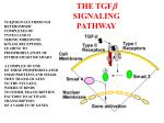 the tgf b signaling pathway
