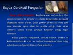 beyaz r k l funguslar