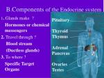 b components of the endocrine system