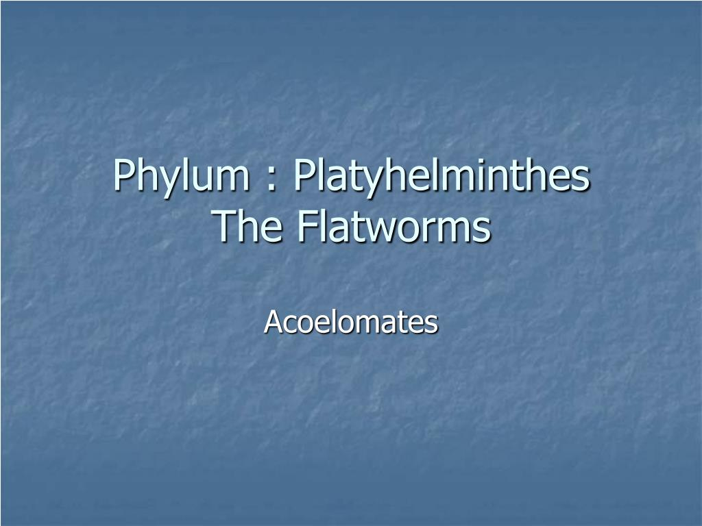 phylum platyhelminthes the flatworms l.