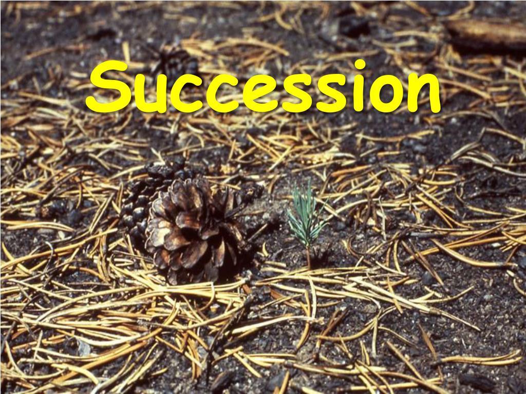 succession l.