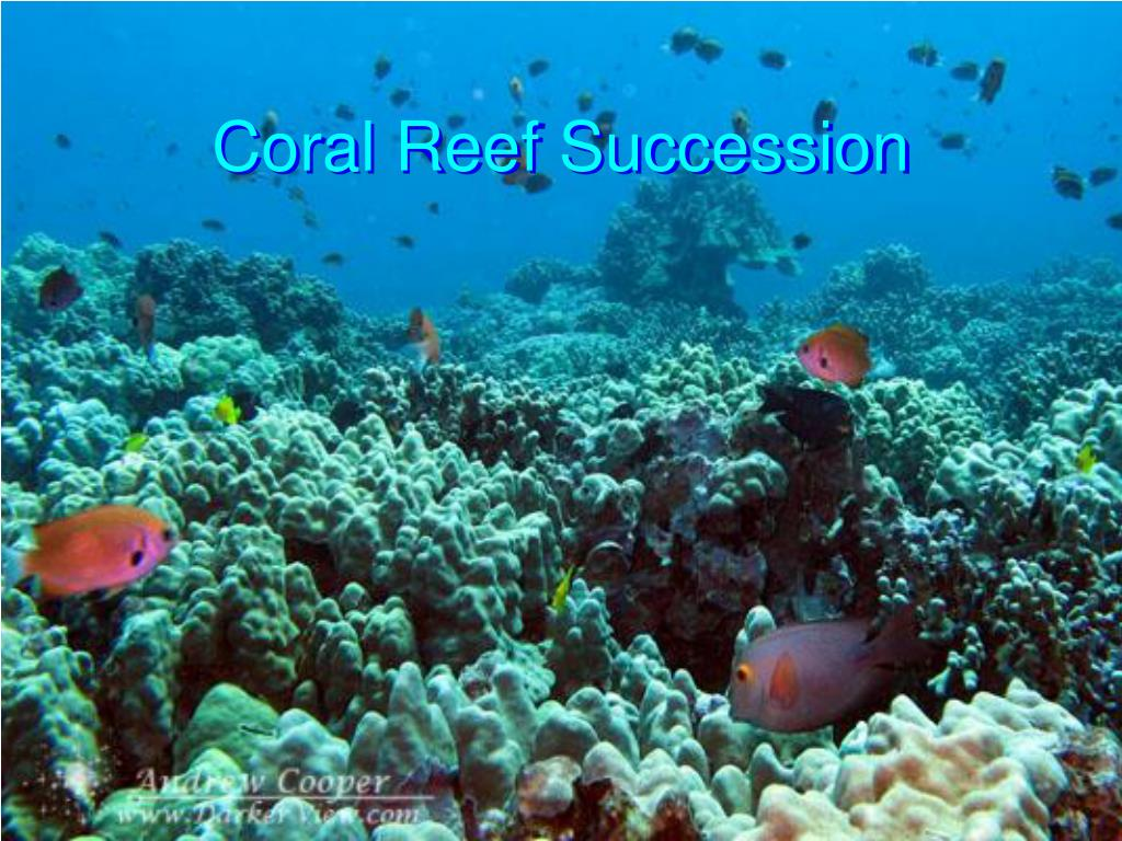 coral reef succession l.