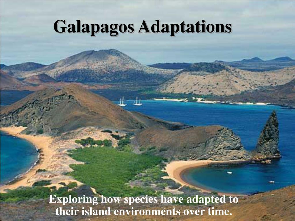 galapagos adaptations l.