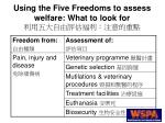 using the five freedoms to assess welfare what to look for12