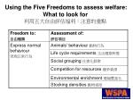 using the five freedoms to assess welfare what to look for13