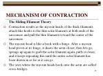 mechanism of contraction