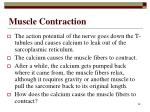 muscle contraction48