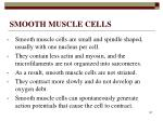 smooth muscle cells147