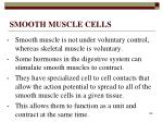 smooth muscle cells148