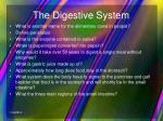 the digestive system5