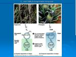 c 4 and cam photosynthesis compared