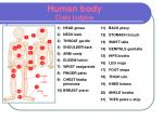 human body cia o ludzkie