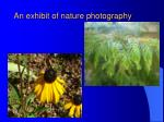 an exhibit of nature photography