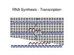 rna synthesis transcription